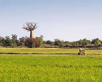 AFRICA – LAST FRONTIER FOR FOOD INGREDIENTS? – PART 1