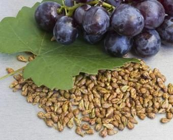 Indena's Grape Seed Extracts Receive Kosher Certification